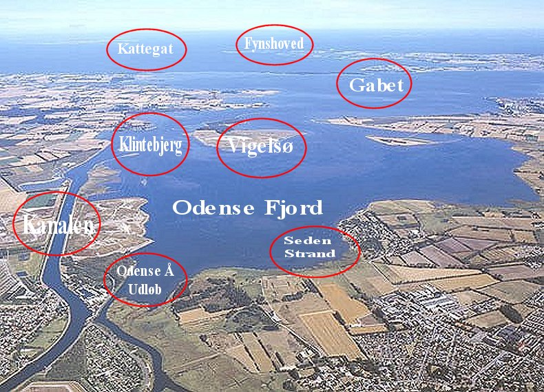 Odense Fjord for lystfiskere